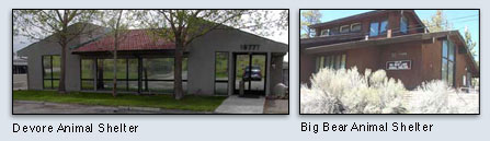 big bear and devore animal shelters